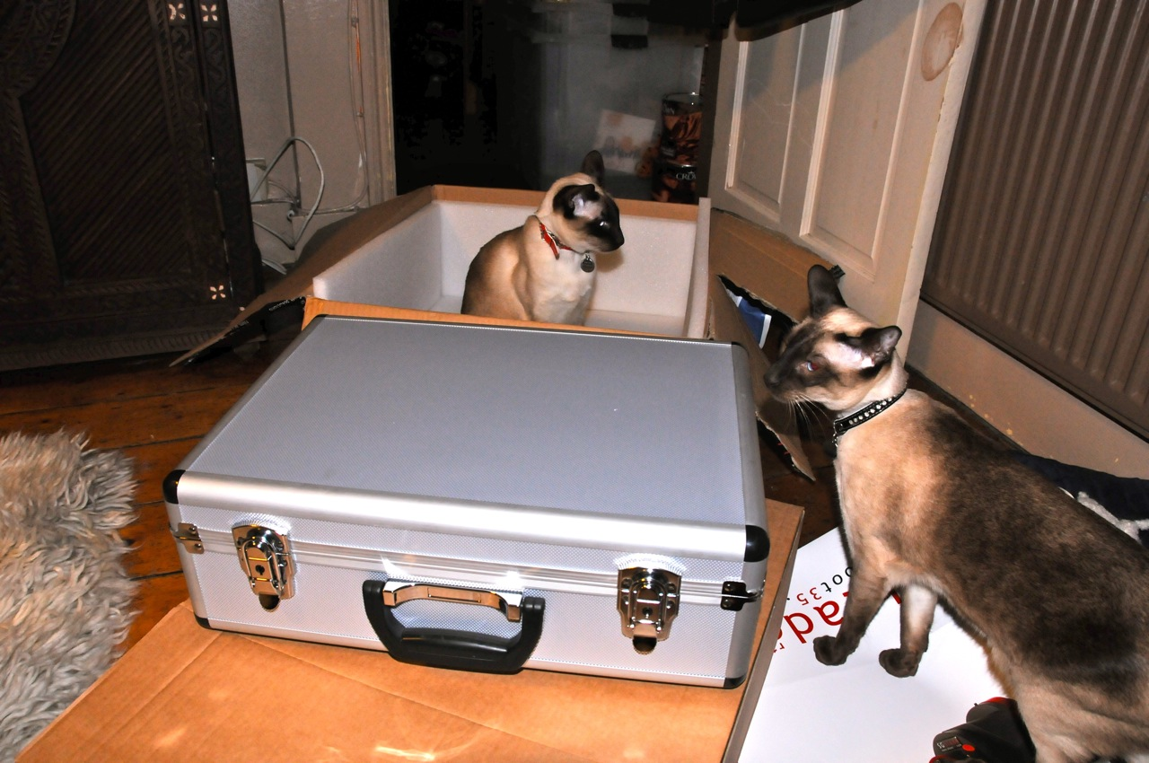 Bert loves the empty box, Percy wants to know what is in the case like he did when he watched Pulp Fiction