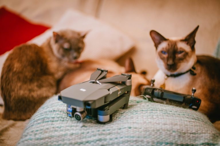 Finally! A drone for cats!